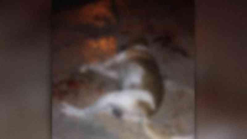 Vizinho é preso após ser flagrado matando cachorro envenenado em Campo Grande, MS