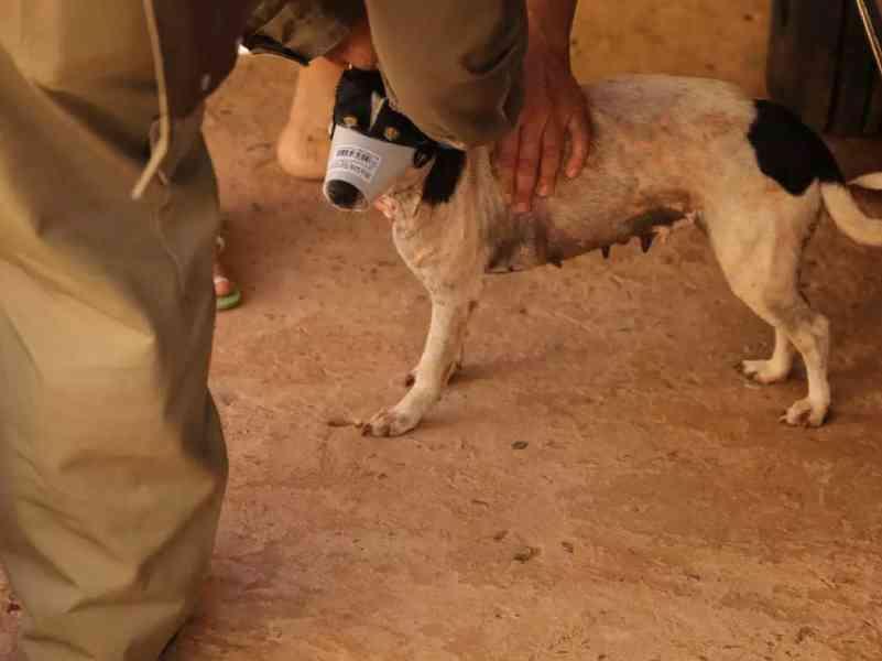 Prefeitura de Ribar do Rio Pardo (MS) terá de arcar com castração e vacina contra gripe de animais abrigados