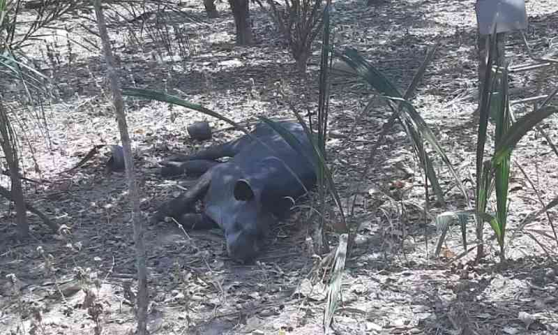 Boletim aponta que maioria dos animais vítimas de queimadas não sobrevive
