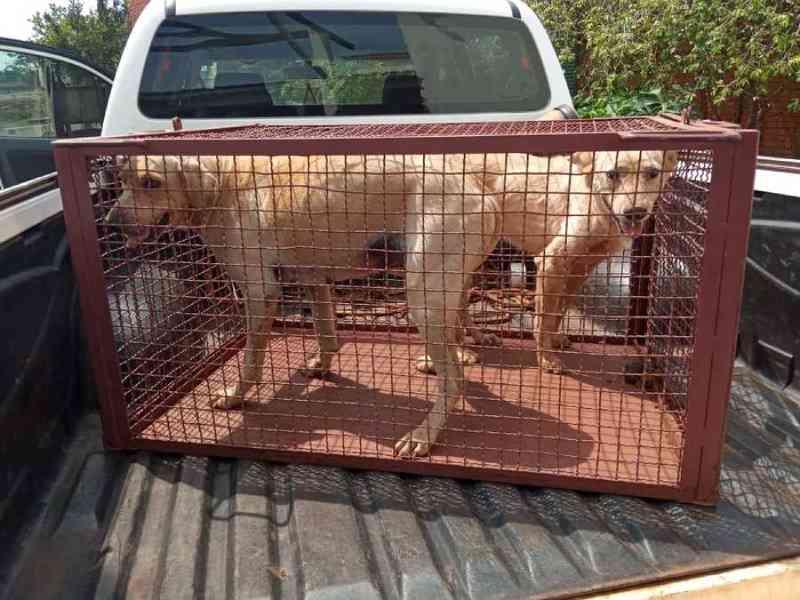 Morador de Nova Andradina (MS) é autuado por maus-tratos contra dois cachorros