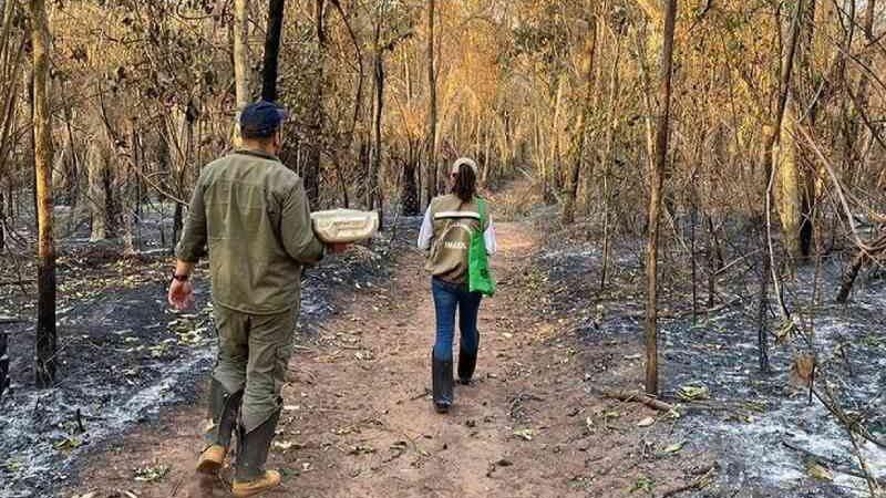 Força-tarefa em MS investiga número de animais mortos pelas queimadas no Pantanal