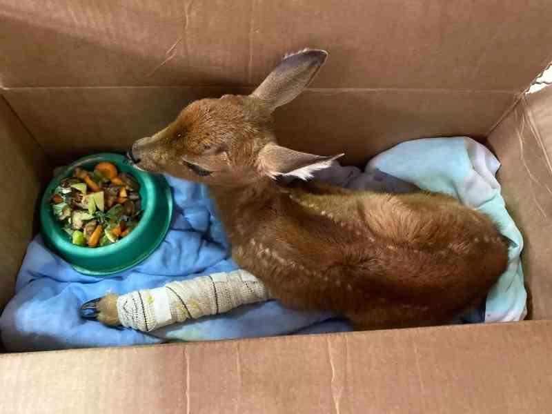 Plano de recuperação prevê envio de alimentos a animais no Pantanal