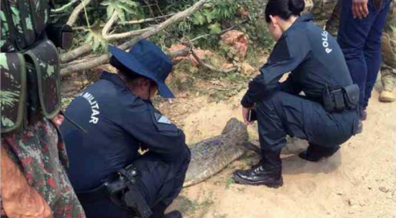 Integrantes da PM socorrem animal ferido (Foto: Divulgação)