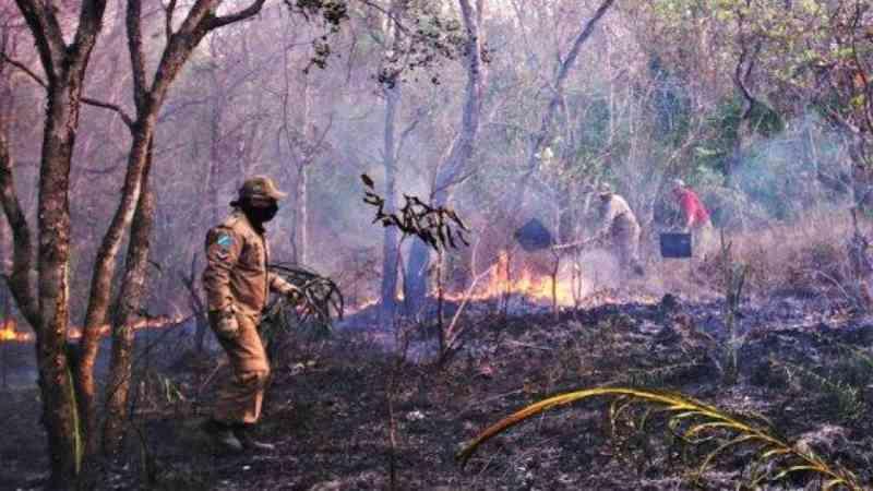 Fogo no Pantanal já dura 40 dias e posto é criado para atender animais feridos