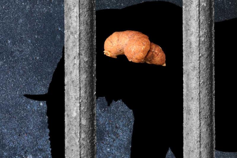 A crueldade neural do cativeiro: manter grandes mamíferos em zoológicos e aquários danifica seus cérebros