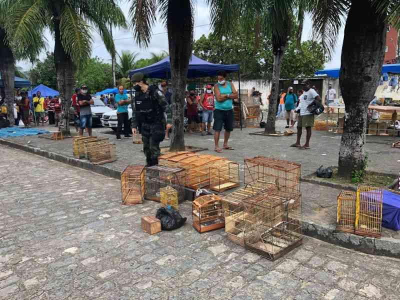 Operação Voo Livre: mais de 170 aves silvestres são apreendidas na feira livre de Guarabira, PB