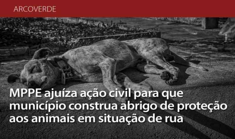 Ministério Público ajuíza ação civil para que município de Arcoverde (PE) construa abrigo de proteção aos animais em situação de rua