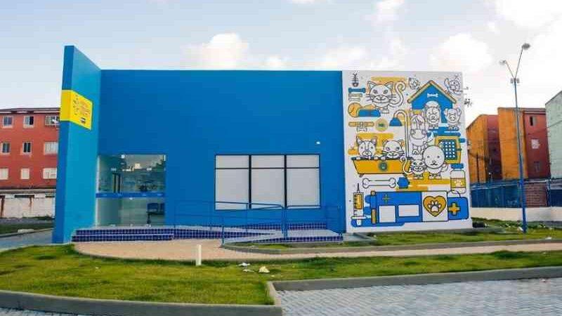 Hospital Veterinário do Recife (PE) retoma castração gratuita de gatos e cachorros