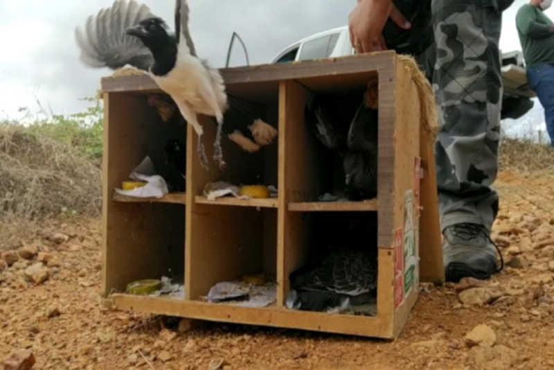 Cerca de 300 animais são devolvidos à natureza em Salgueiro, PE