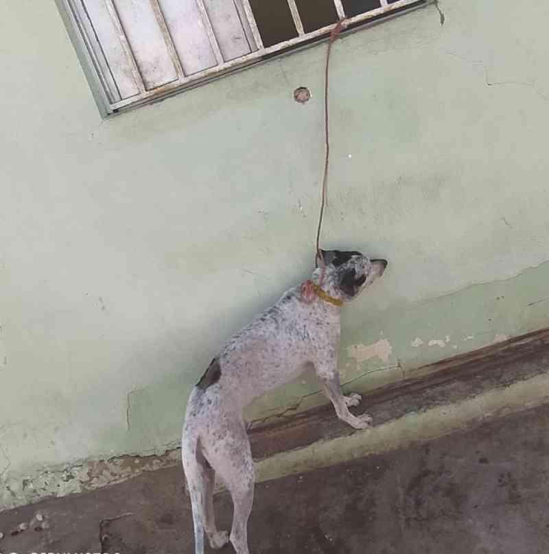 Suspeita de matar cachorro de vizinha com veneno é autuada por maus-tratos contra o próprio animal em Teresina, PI