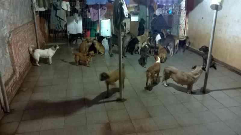 Animais de rua: MP cobra da Prefeitura de Cascavel (PR) solução sobre abrigo
