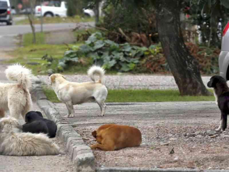 Deixar cachorro solto na rua vai render multa de até R$ 2 mil em Curitiba, prevê projeto de lei