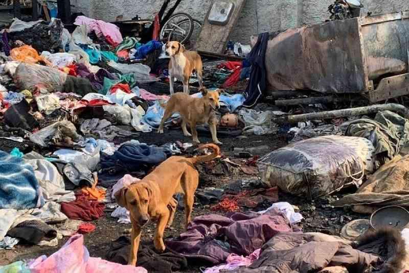 Homens são presos suspeitos de incendiar casa e matar cerca de 10 cachorros em Curitiba, PR