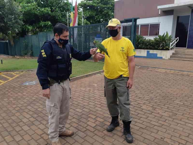 PRF de Guaíra (PR) resgata ave silvestre com sinais de maus-tratos