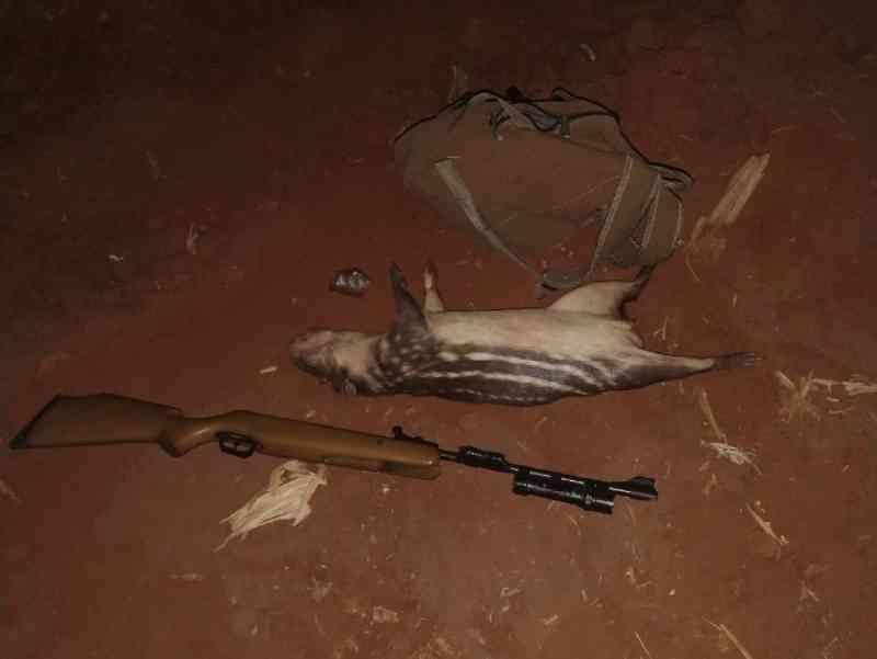 Caçador é preso com paca abatida, arma de fogo e munição no Paraná; fotos