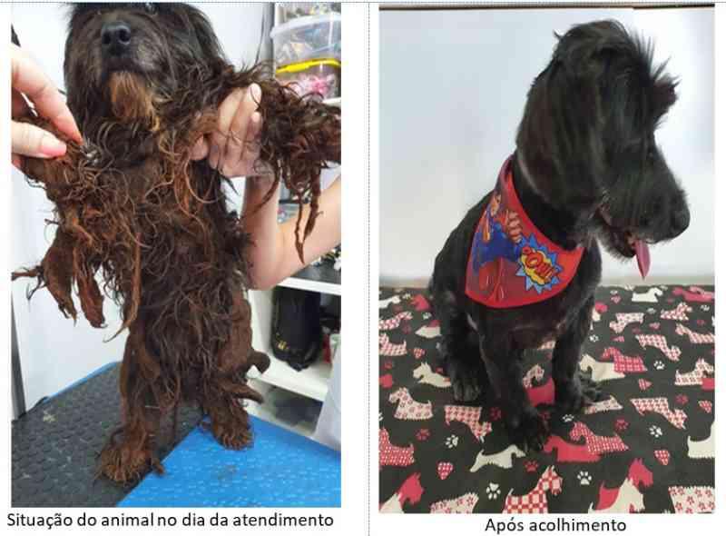 Em seis meses, Polícia Civil de Toledo (PR) atendeu diversos casos de maus-tratos a animais