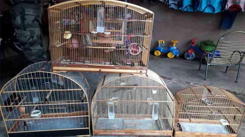 Polícia ambiental prendeu 231 pessoas e resgatou mais de 2 mil aves no Paraná