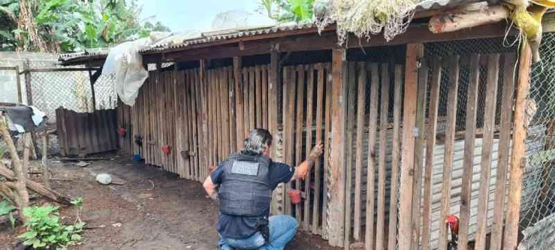 11 suspeitos de organizar rinhas de galo no Paraná, Santa Catarina e São Paulo são presos em operação