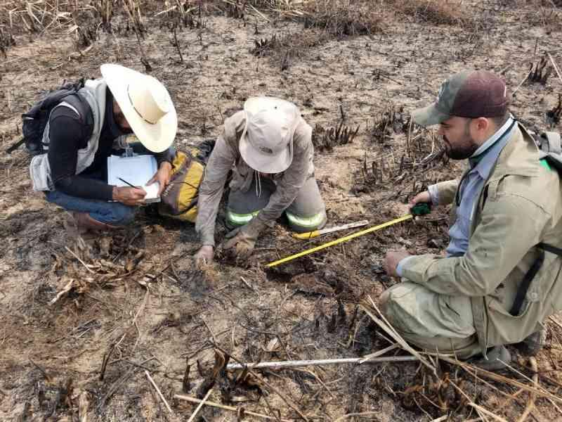 Força-tarefa investiga número de animais mortos no Pantanal