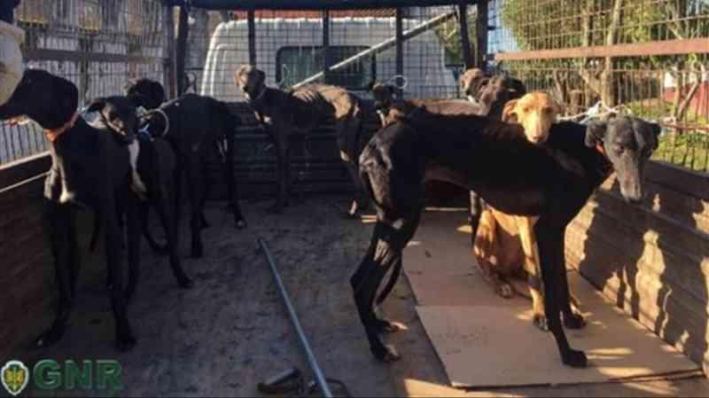 Dona de abrigo para cães detida por maus-tratos a animais em Portugal