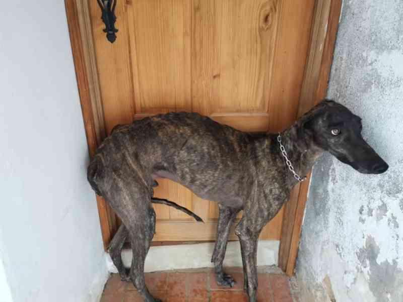 IRA envolve toureiro João Moura em novo caso de maus-tratos a galgos, em Portugal