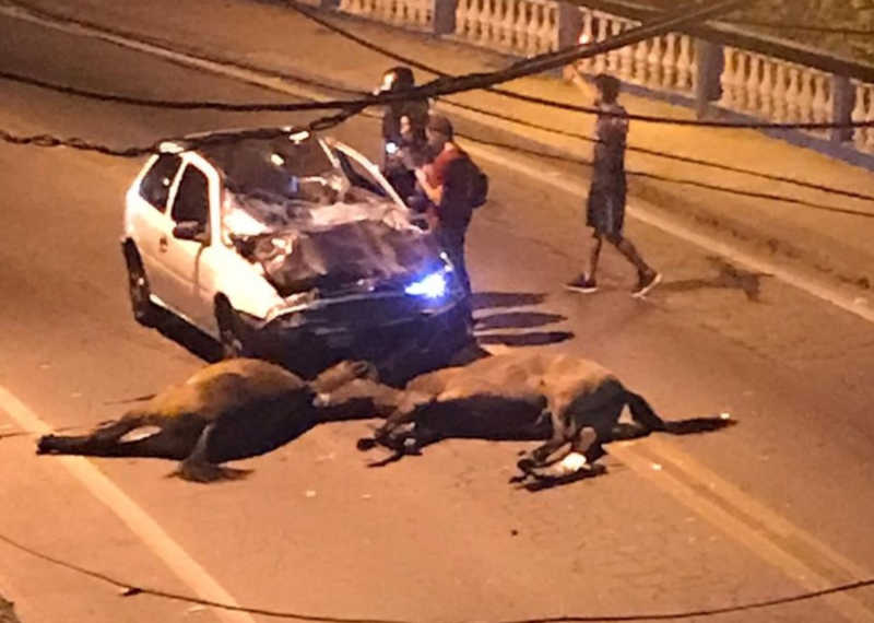 Homem morre após atropelar dois cavalos em Barra do Piraí — Foto: Reprodução/WhatsApp TV Rio Sul