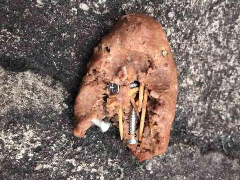 Moradora encontra carne moída com objetos cortantes no quintal de casa, que seria para o cão dela; Polícia Civil investiga
