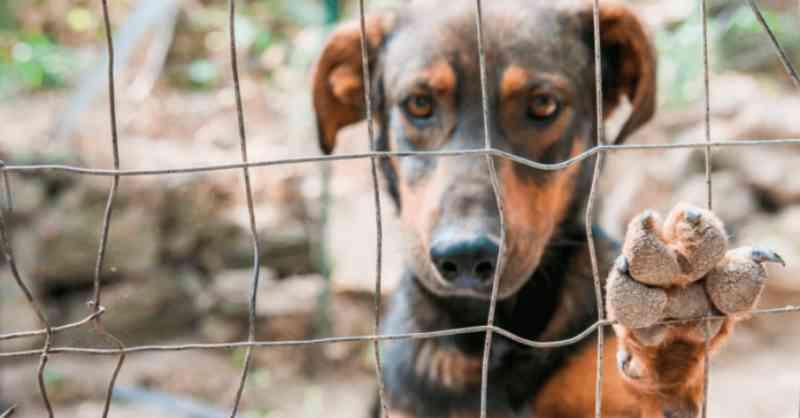 Projeto de lei propõe obrigar síndicos a denunciarem maus-tratos a animais no RJ
