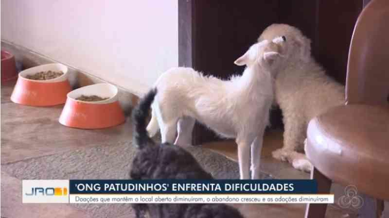ONG busca apoiadores para continuar cuidando de animais maltratados em Porto Velho, RO