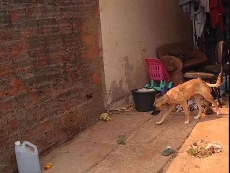 Policiais militares constatam situação de maus-tratos contra animais em Vilhena, RO
