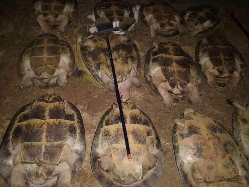 Quatro pessoas são detidas com 14 tartarugas e mais de 80 ovos de quelônio em RO