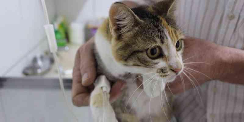 Prefeitura inicia castração cirúrgica de cães e gatos em Parobé, RS