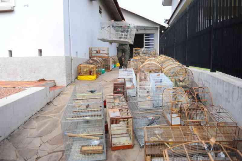 Criador ilegal de pássaros deverá pagar multa de mais de R$ 500 mil