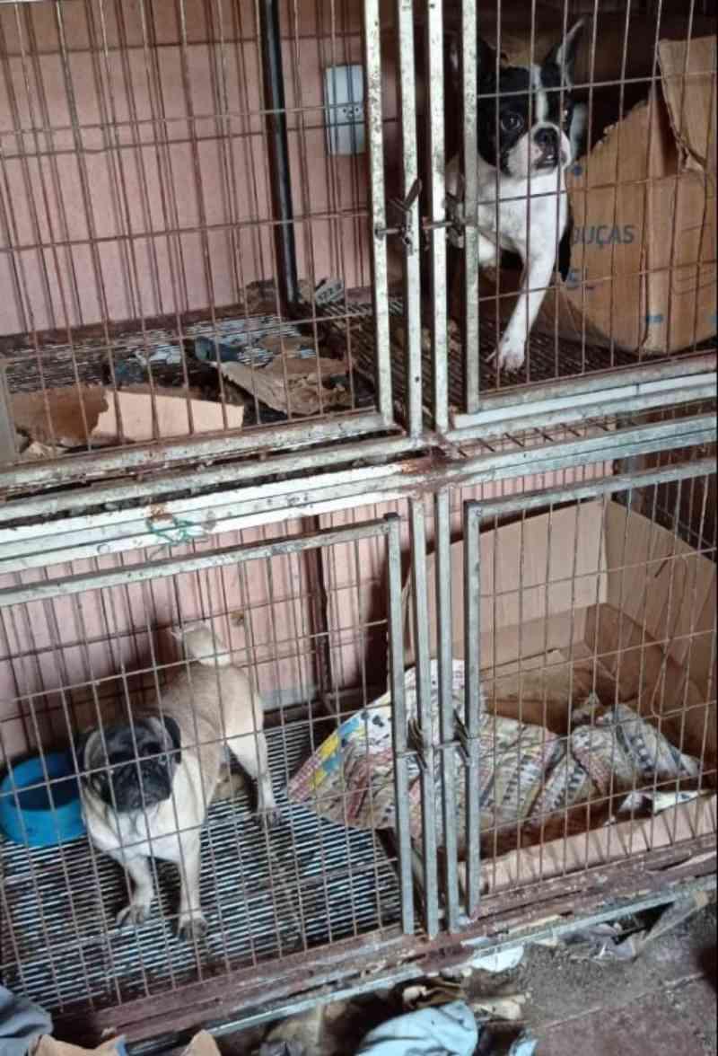Denúncia anônima leva polícia a canil clandestino com 27 cães em Joinville, SC