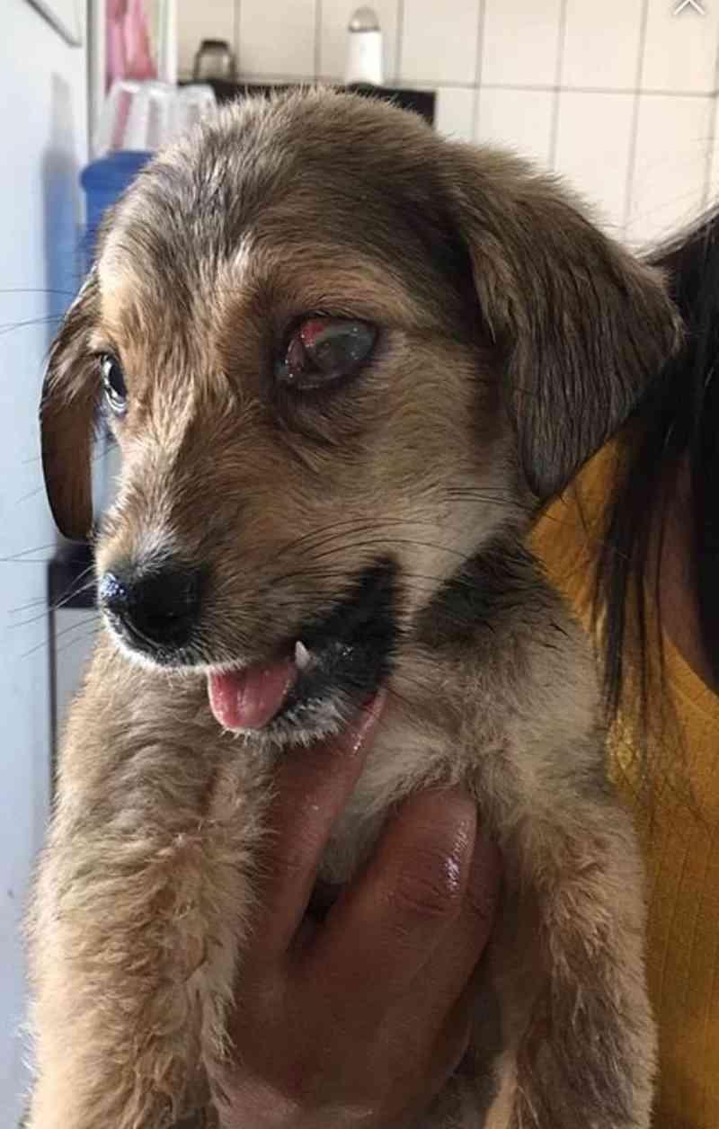 Cachorrinho com mandíbula quebrada é resgatado e ganha um lar, em Navegantes, SC