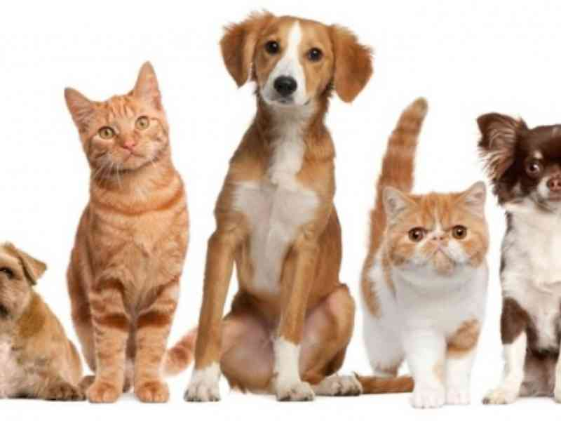 Con Animal não vai mais recolher animais e nem prestar atendimentos em Concórdia, SC