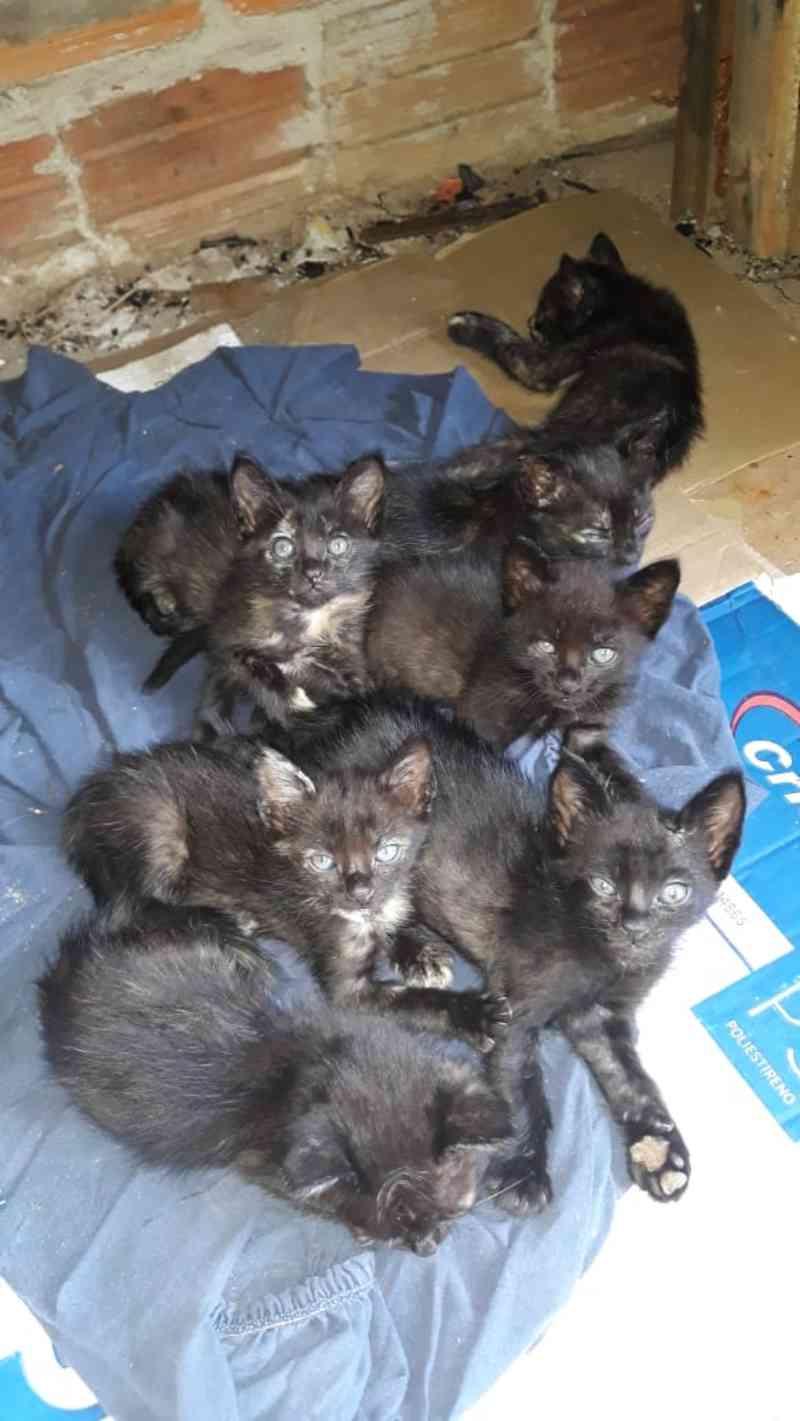 'Louca dos gatos': mulher que abrigou 150 animais abandonados será indenizada