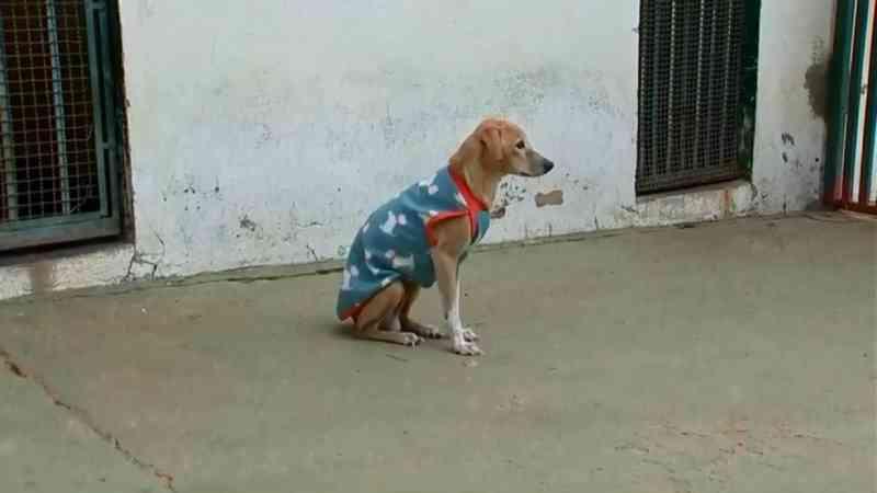 Número de animais abandonados cresce em Araçatuba (SP) durante a pandemia