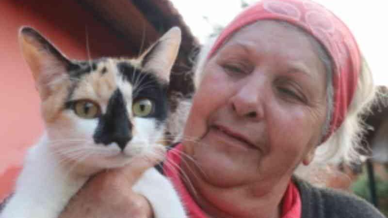 Descontrole de animais na rua pede a volta do Castramóvel em Bauru, SP