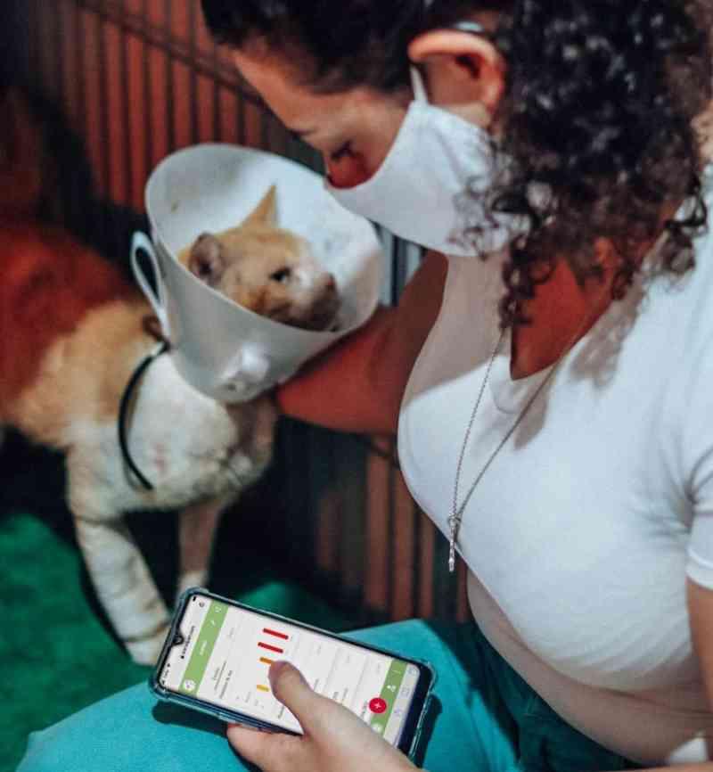 Pesquisadores de Botucatu (SP) desenvolvem aplicativo capaz de detectar dores em animais