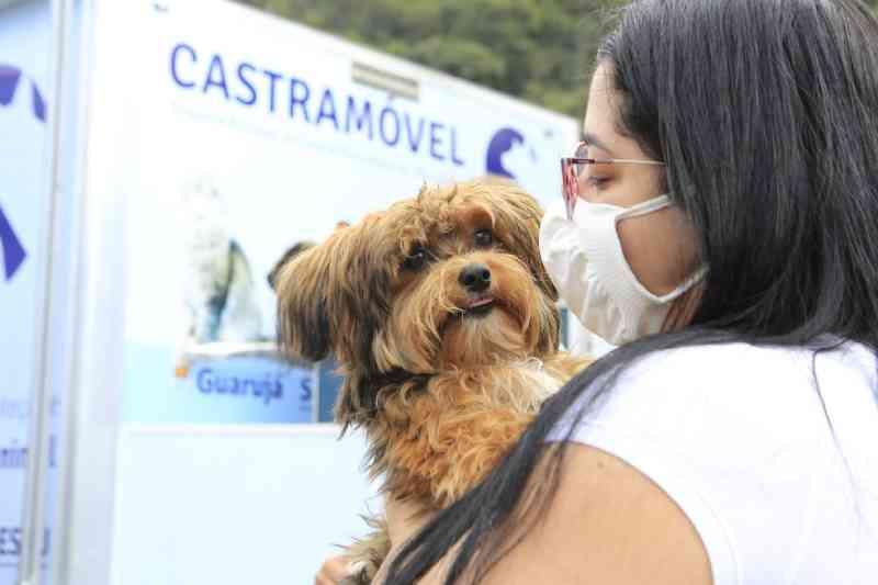Guarujá, SP, abre cadastro para castração de 240 cães e gatos nesta terça-feira