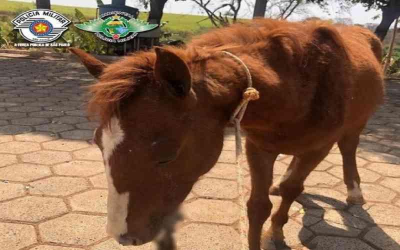 Cavalo sofre maus-tratos e têm feridas necrosadas, em Itápolis, SP