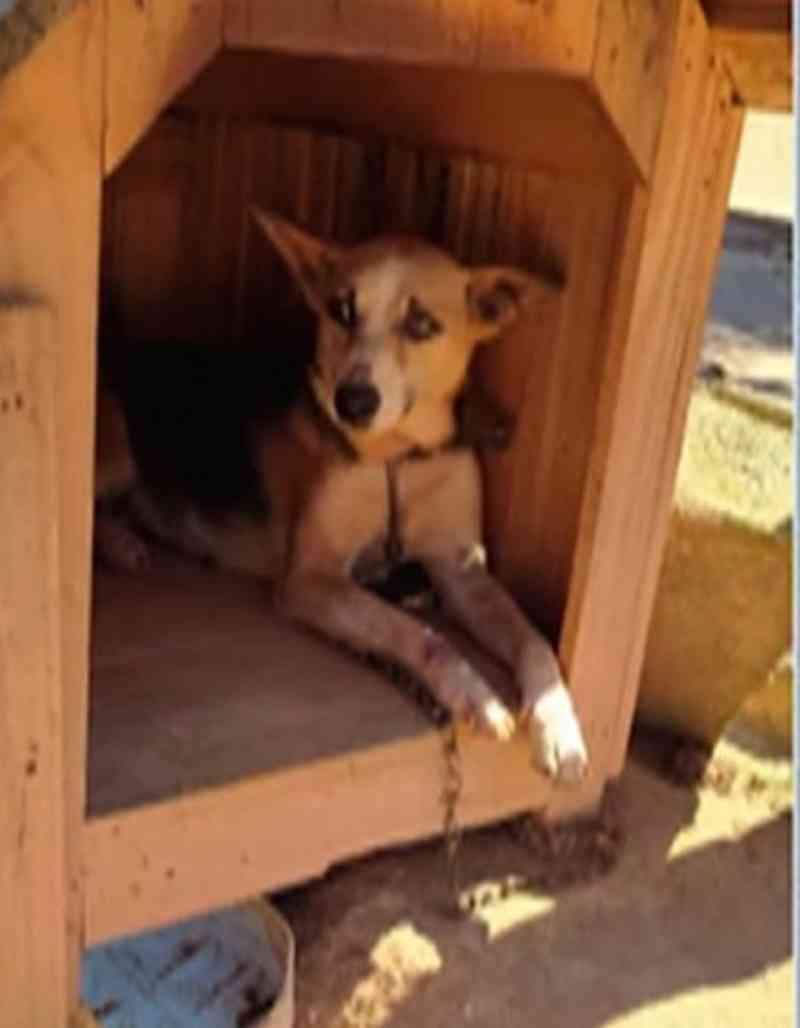 Mais de 80 animais em situação de maus-tratos são resgatados em Itaquaquecetuba (SP), diz polícia