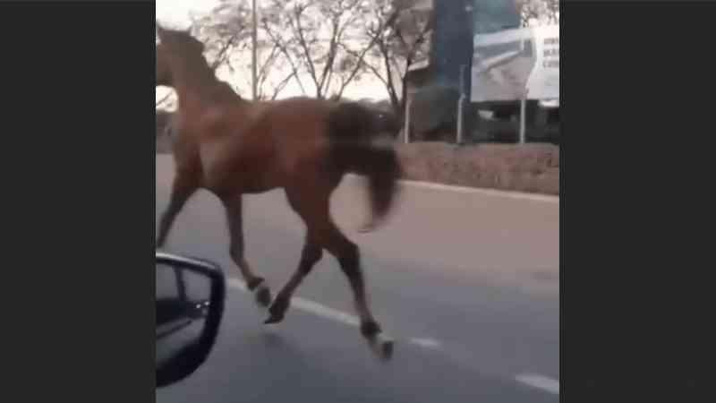 Cavalo amarrado com corda é puxado por carro em rodovia de Jundiaí, SP