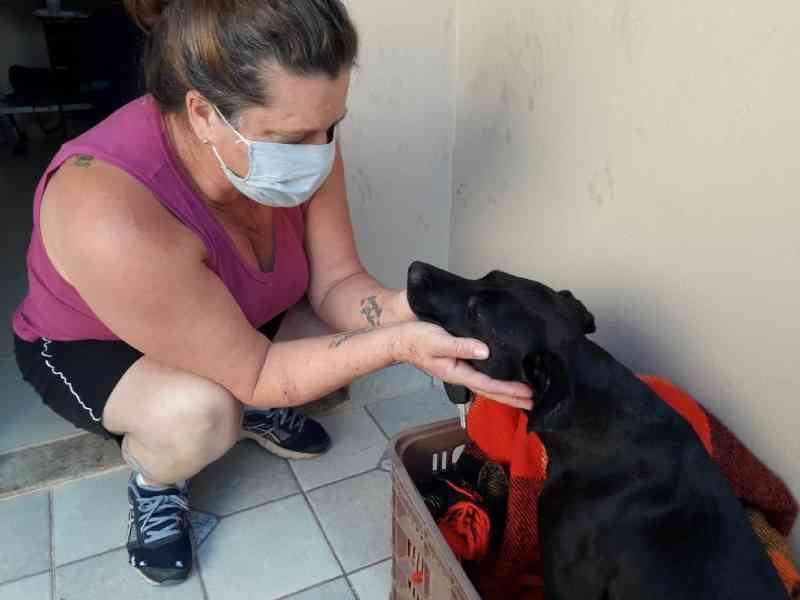 Doações de rações para ONG de animais caem 50% durante a pandemia