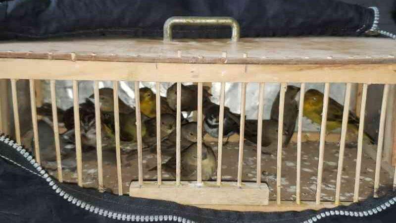 PRF apreende pássaros silvestres dentro de mala em rodovia no interior de SP
