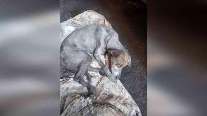 Cachorra é arrastada por carro na região do Graminha, em Limeira, SP