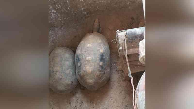 Jabutis vítimas de maus-tratos são resgatados em Limeira, SP