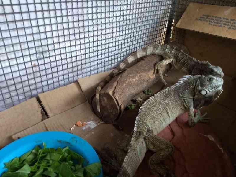 Operação Jequitibá termina com 50 animais silvestres resgatados e mais de R$ 54 mil em multas aplicadas