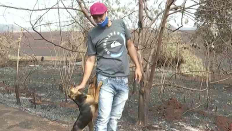 Vigilante reencontra cães após salvá-los durante incêndio em Ribeirão Preto, SP